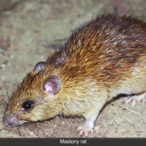 Lassa Fever Claim 2 Lives In Plateau State While Delta State Records First Case