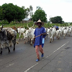 When Men Die That Cattle May Live! By Reno Omokri
