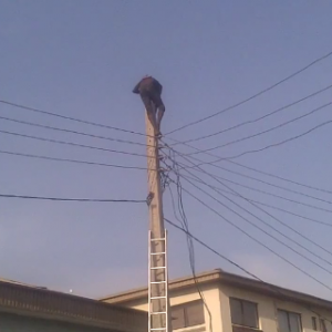 Suicidal Man Who Climbed Lekki Electric Cable Was Allegedly A Thief