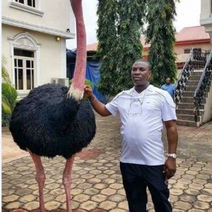 KWAM 1 Poses With His Giant Pet Ostrich In His Mansion (Pics)