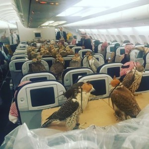 (Photo) Too Much Money ! Saudi Prince Buys 80 Plane Tickets For His 80 Hawks