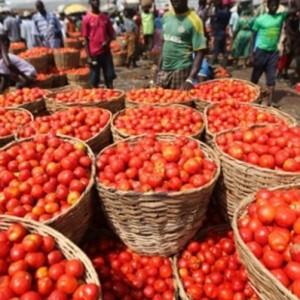 Farmers Flood Lagos Market with Fresh Tomatoes