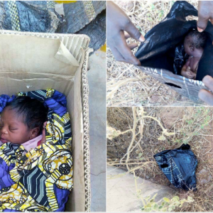 Photos : Two Abandoned Babies Found In Kebbi : 1 Found Alive The Other Found Dead