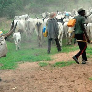 Fresh 'Herdsmen' Attack 32 Killed In Nasarawa Communities