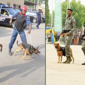 2019 Polls: Civil Defence, Police Demand N317m To Feed Dogs, Horses Ahead of 2019 Elections