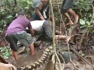 Photos: Huge 27ft Python Caught After Wrapping Itself Around Man's Ankle